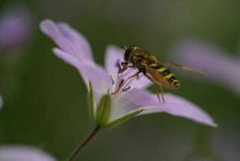 Bees prefer a dry flower location for optimal nectar uptake.