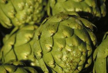 Cooler summer climates suit artichokes well.