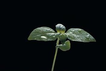 Flower seeds started indoors in late winter allow gardeners to enjoy bloom earlier.