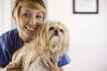 Veterinary assistants provide support for animals under veterinary care.