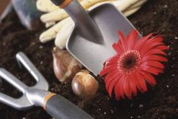 Using sterilized tools reduces the risk of infection in your plants.