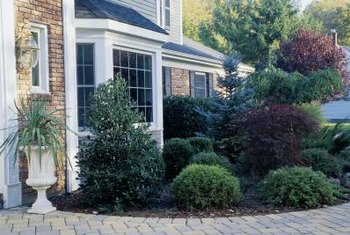Weeping shrubs offer variety in a garden border.