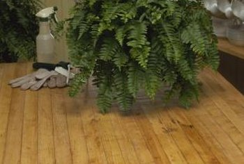 Boston ferns can be messy as they drop fronds from their baskets.