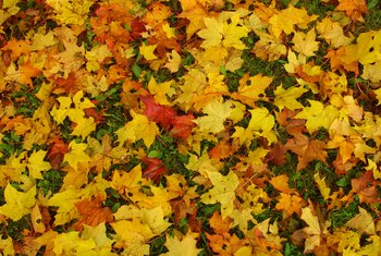 Fallen leaves return nitrogen to the soil as they decompose.