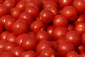 Proper support can result in a bumper crop of hydroponic tomatoes.