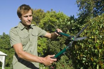 Landscape maintenance workers trim bushes.
