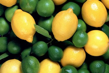 Dwarf citrus trees can yield up to 20 fruits per season.