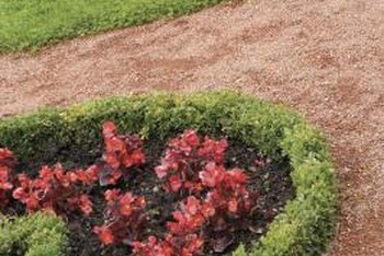 Boxwoods are known for their ability to assume almost any shape with pruning.