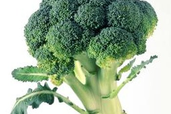 Broccoli stalks are generally 1 1/2 inches thick at the time of harvest.
