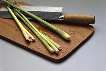 Lemongrass has sturdy shoots that resemble green onions at the base.