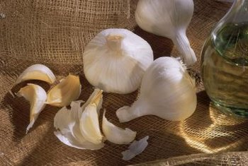 Keep pests from munching on crops with garlic spray.