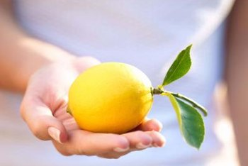 The Meyer lemon has thinner skin than other types of lemons.