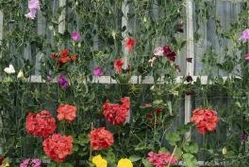 A trellis with climbing plants can conceal and beautify a wall.