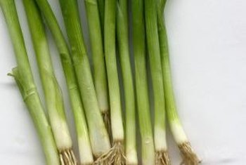 Immature onions are suitable for fresh eating and cooking.