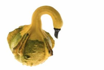 Enhance natural goose gourds with whimsical or realistic embellishments.