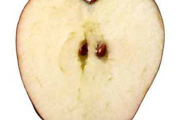 Apple seeds don't usually produce trees identical to the parent.