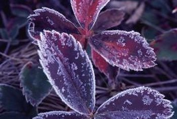 Keep frost from nipping at your plants' leaves with a cover.