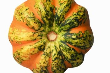 Lakota squash is reddish-orange with distinguishing green streaks.