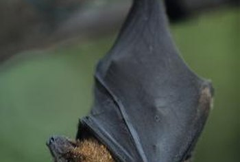 Bat guano is a rich source of nutrients for plants.