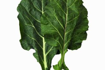 Good collard yields depend on your knowledge of pests and beneficial insects.