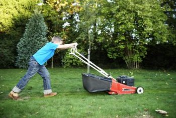 Take care when mowing around trees to avoid damaging their roots or trunks.