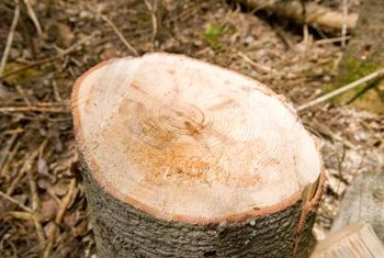 Treat stumps to speed up decomposition.