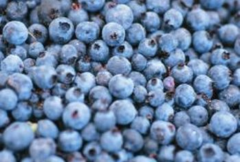 "One ""Sunshine Blue"" bush can produce 5 to 10 pounds of blueberries."