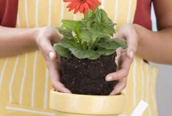 Plants depend on drainage to maintain proper soil moisture in containers.