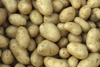 Scab affects the marketability, but not overall yield, of potatoes.