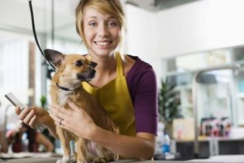 Animal groomers care for the needs of household pets.