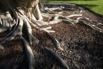 Extricating tree roots requires considerable pulling power.