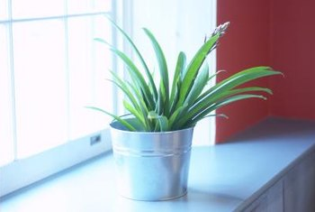 Indoor plants may need supplemental light.
