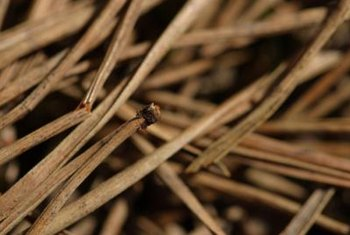 Pine needles, sometimes called pinestraw, acidify the soil.