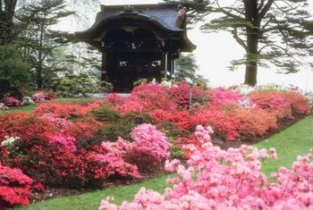 Azaleas float above green lawns like brightly flowered clouds.