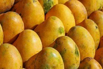 Polyembryonic mangoes tend to be less brightly colored.