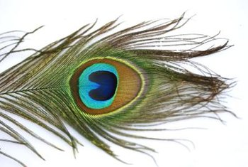 Magnify the elegance of peacock feathers in a submerged feather centerpiece
