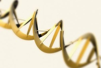 DNA is the protein that enables evolution to occur.