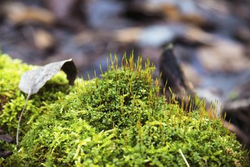 Moss grows on a tree stump.