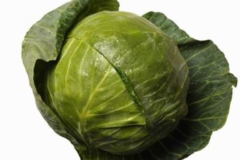The leaves of the world's record cabbage weigh 2 pounds.