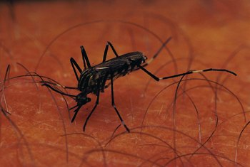Use a simple and natural approach to mosquito control.