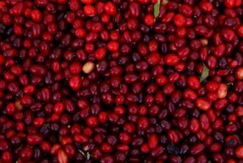 Cranberries grow well in the home garden, but cold stratification is necessary.