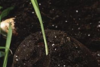 Most plants need a friable soil texture for ample growth.