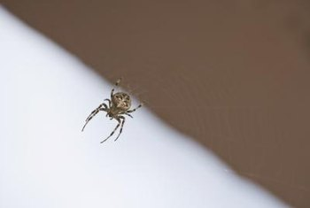 Diatomaceous earth works by drawing the fluids out of spiders.