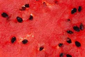 Watermelons, seedless and seeded, will not fruit without pollination.