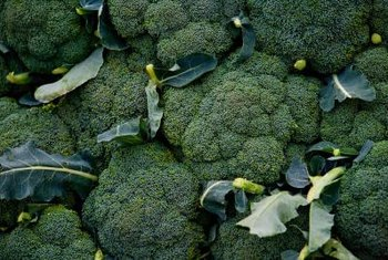 Compact clusters of flower buds and stems are the edible parts of broccoli.