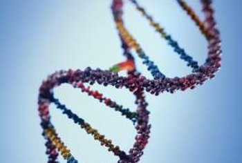 DNA is the blueprint that determines what proteins can be synthesized.
