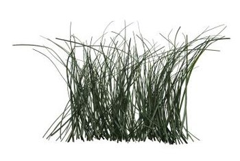 Lemongrass is often used to flavor teas, soups and other cuisine.