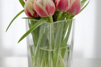 Once tulips are picked and placed in water, they can grow another 4 to 6 inches.