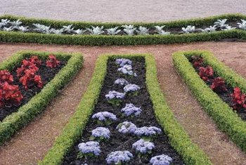 Green velvet boxwoods add color and structure when used as hedges and borders.