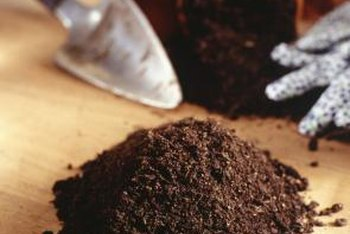 A moist, well-drained soil mix is crucial to the survival of many potted plants.